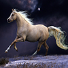 Beautiful Horse Running in Night