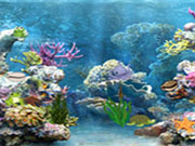 Hidden Objects-Underwater World