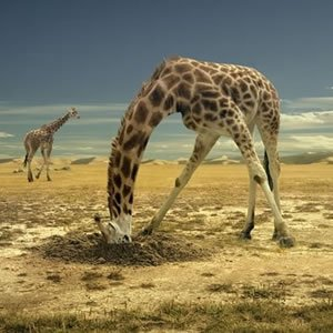 The Giraffes Puzzle
